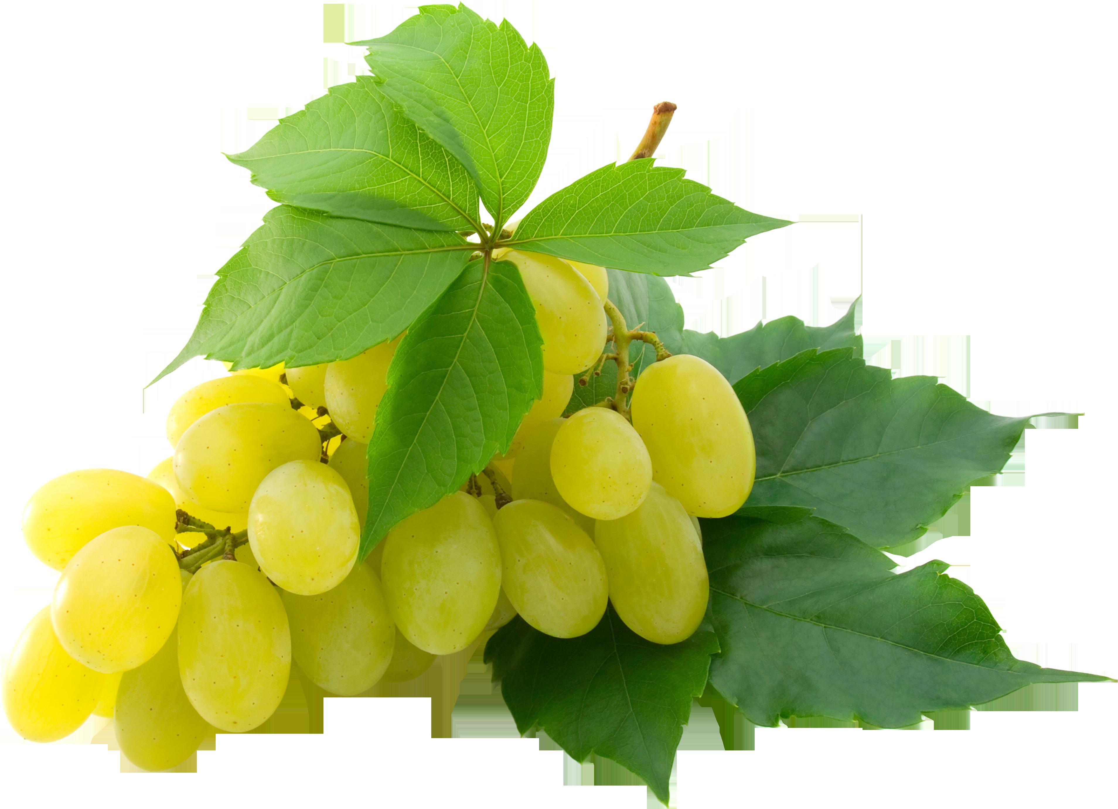 Grapes PNG - 21511