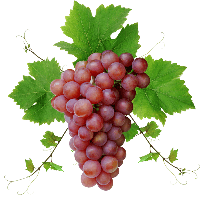 Grape Png Image Download Picture PNG Image - Grapes PNG