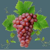 Grapes PNG - 21509