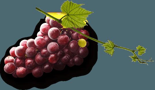 Grapes PNG - 21513