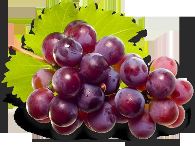Grapes PNG - 21508