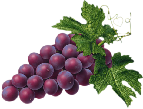Red Grape PNG Picture - Grapes PNG