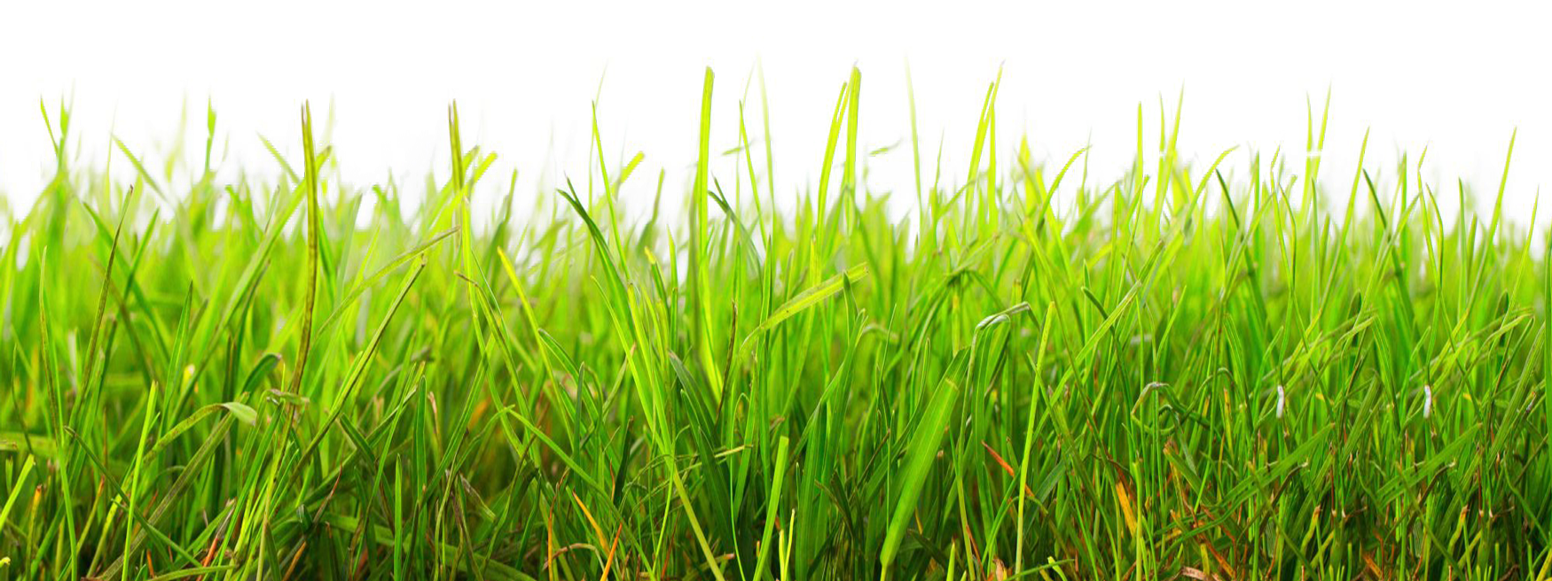 PNG GRASS by Moonglowlilly Pl