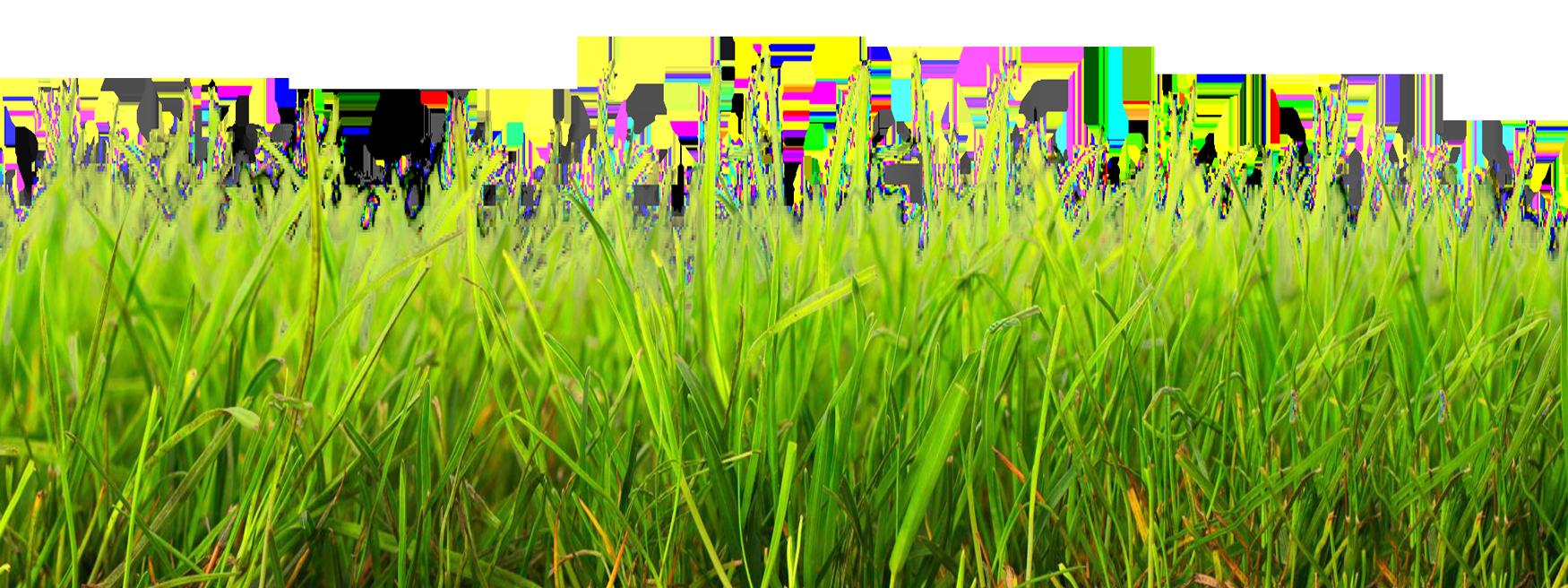 Grass HD PNG-PlusPNG.com-1750 - Grass HD PNG