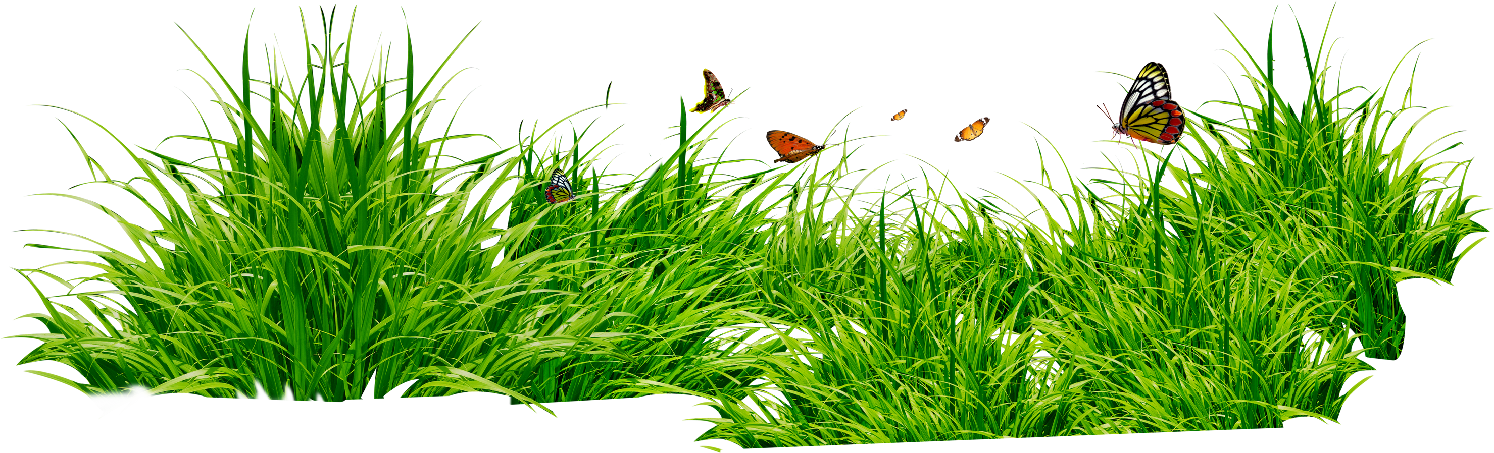Grass images pictures clip art - Grass HD PNG
