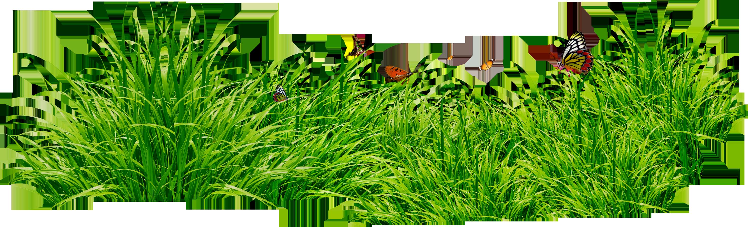 Grass HD PNG - 119872