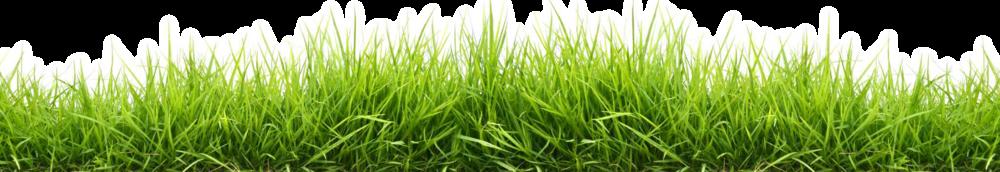 Grass HD PNG - 119877