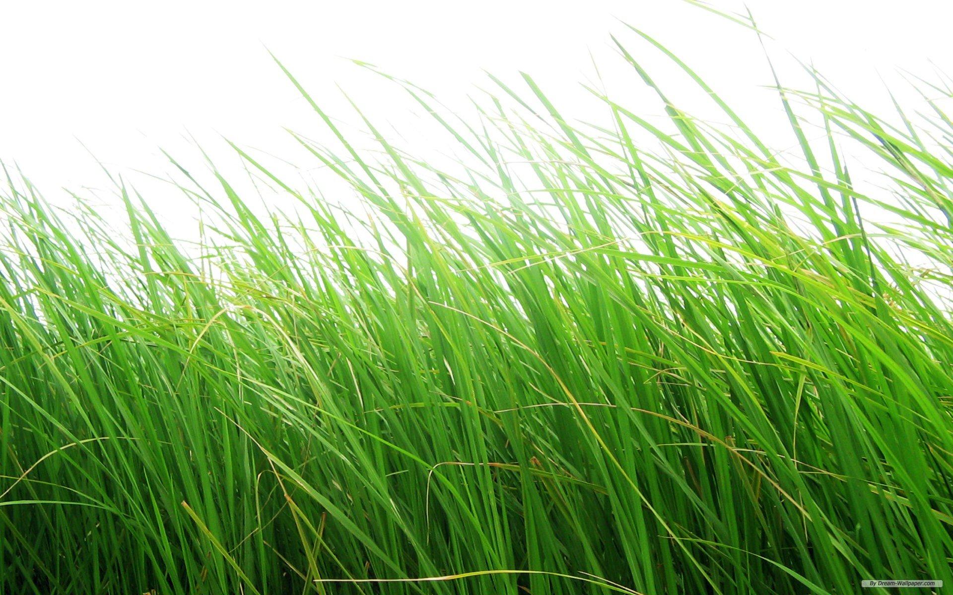 Grass Png - Grass HD PNG