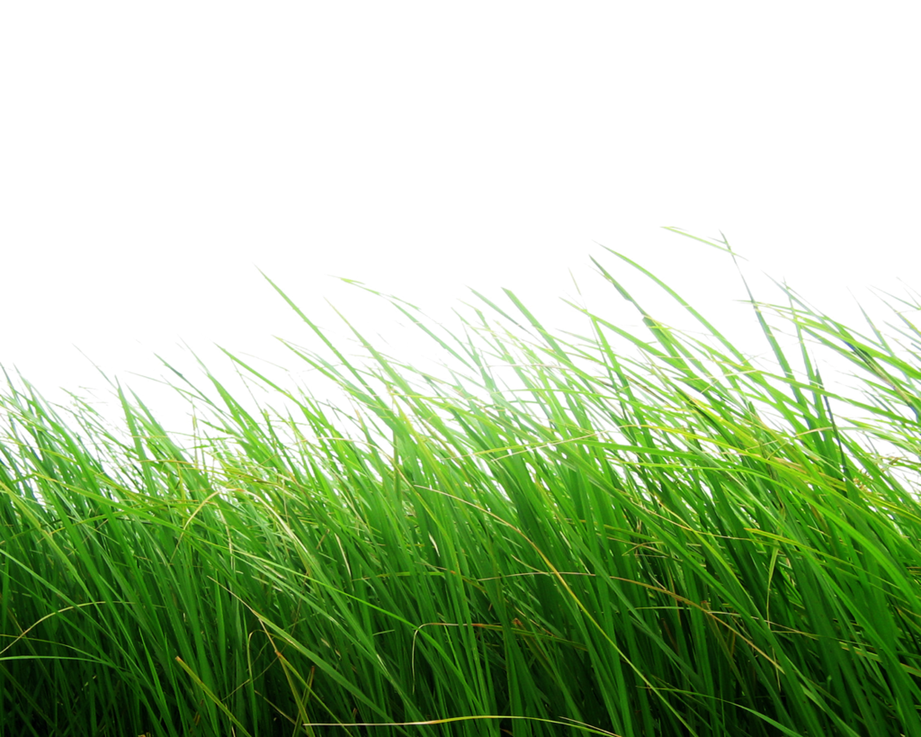 Grass Png Image, Green Grass PNG Picture - Grass HD PNG
