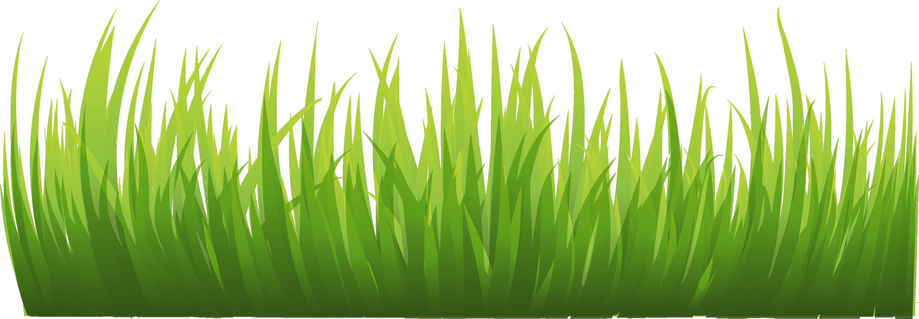 Grass HD PNG - 119868