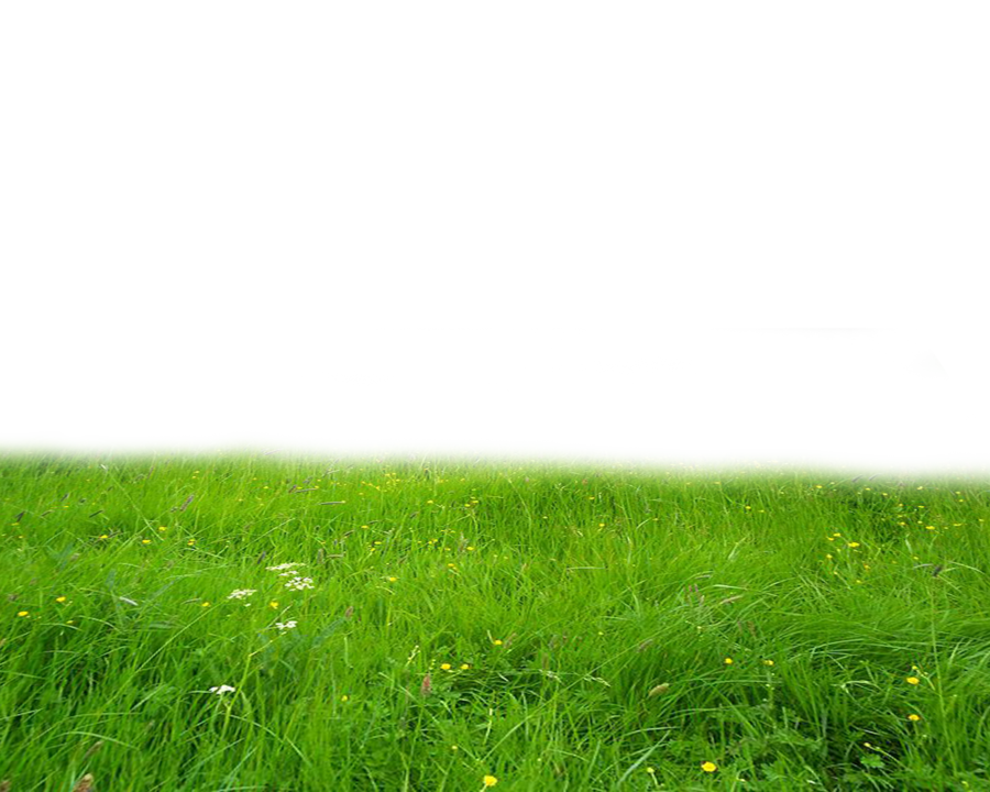 PNG GRASS By Moonglowlilly PlusPng.com  - Grass HD PNG