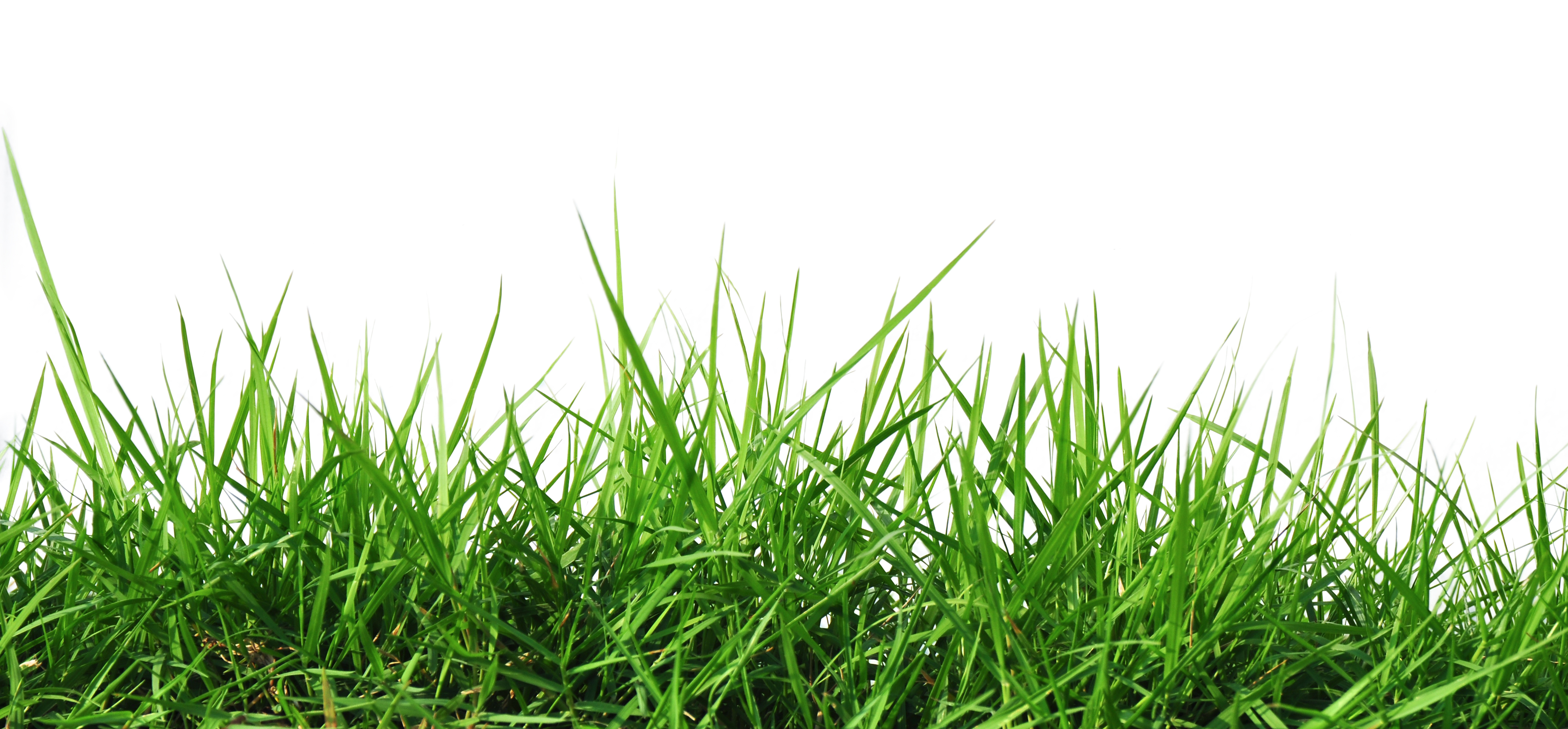 Grass HD PNG - 119874