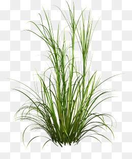Underbrush, Grass, Green, Creative Grass PNG Image - Grass HD PNG