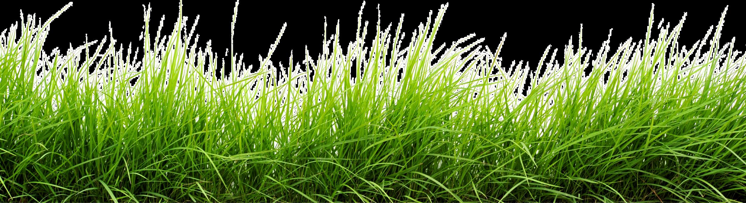 Grass PNG - 8627