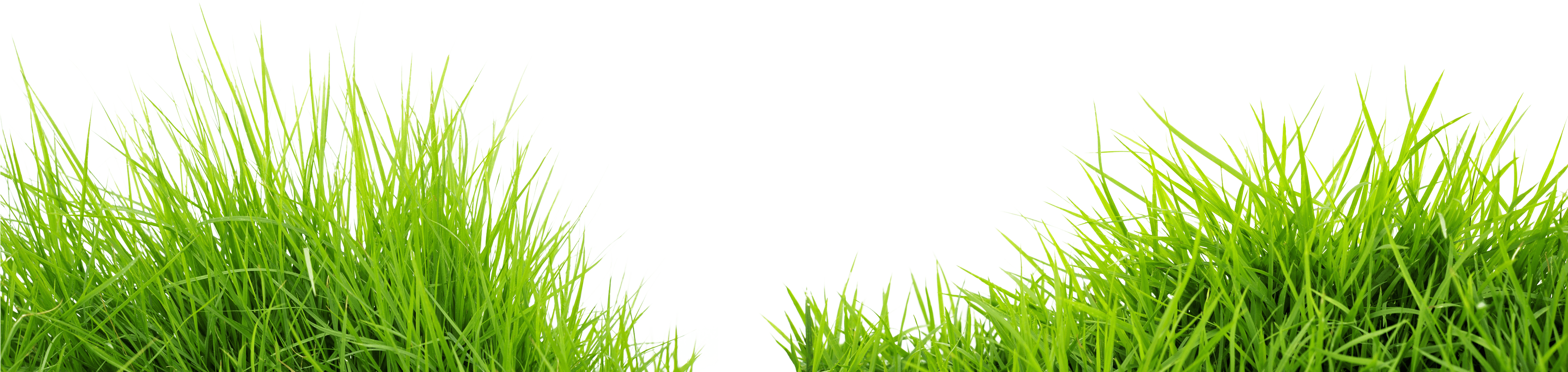 Grass PNG Clipart Picture