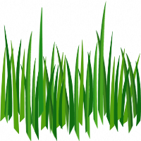 Grass Png Image Green Grass Png Picture PNG Image - Grass PNG