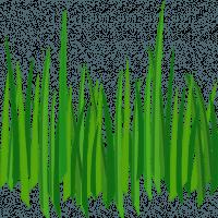 Grass Png Image Green Grass P