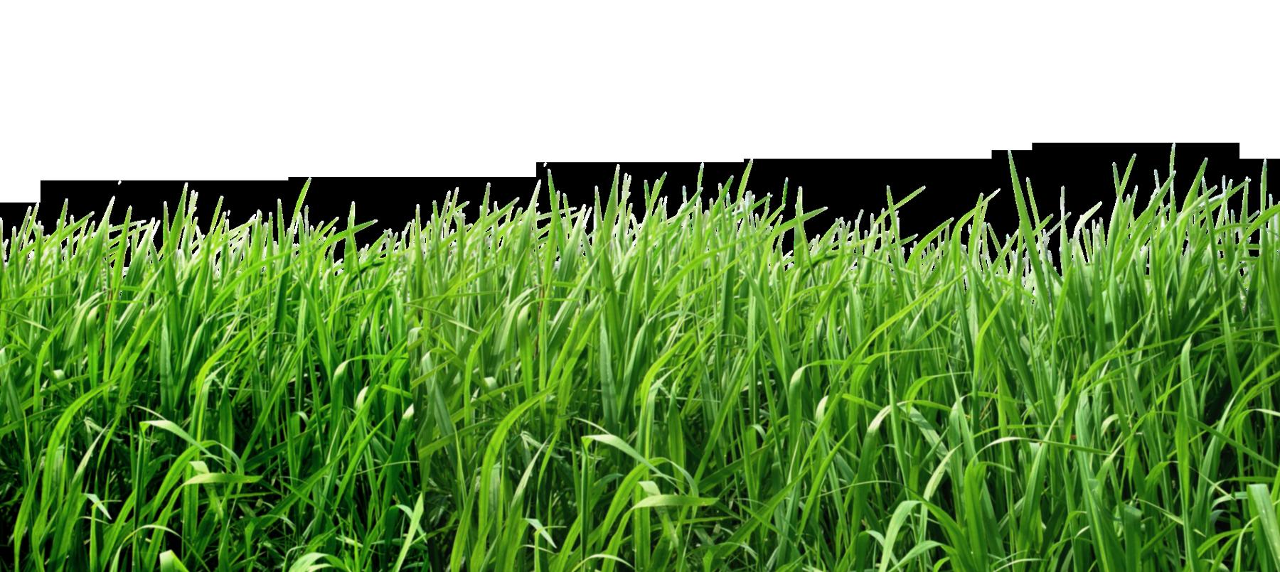 Grass PNG - 8624