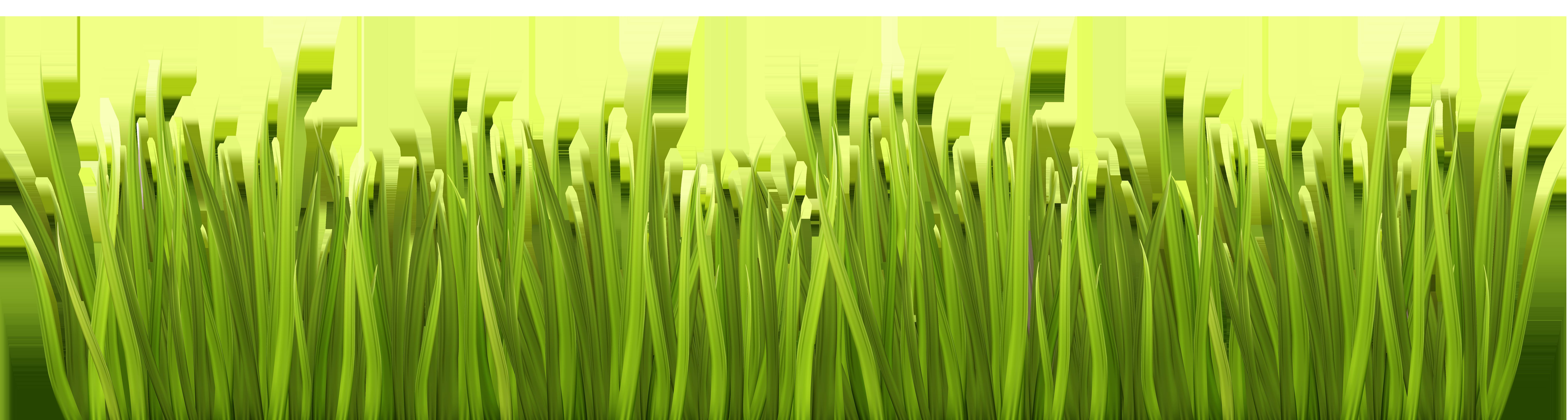spring grass png transparent