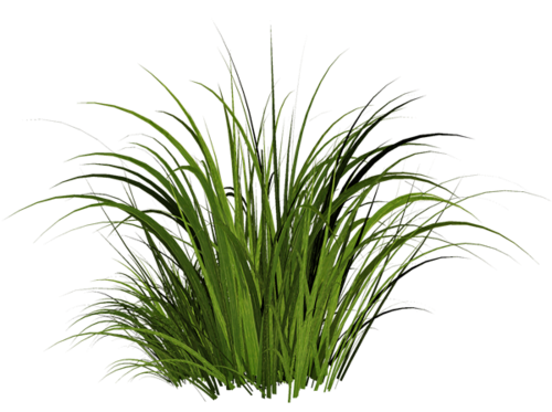 Tall Grass Texture Png image