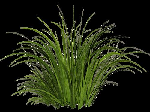 Grass PNG - 8635