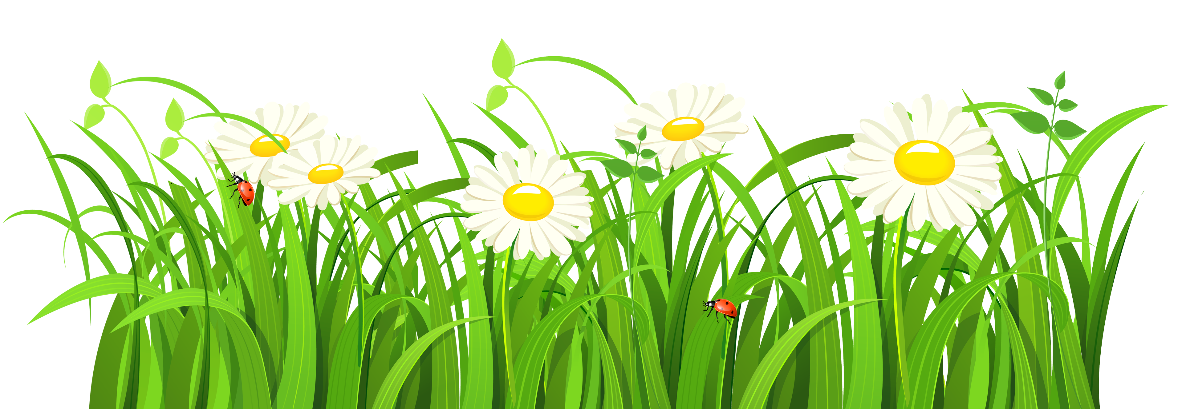 Grasses PNG HD - 150647