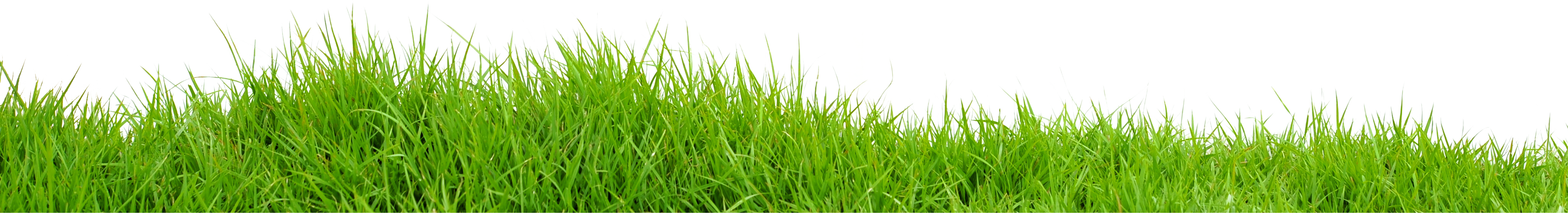 Grasses PNG HD - 150634