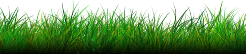 Grasses PNG HD - 150633