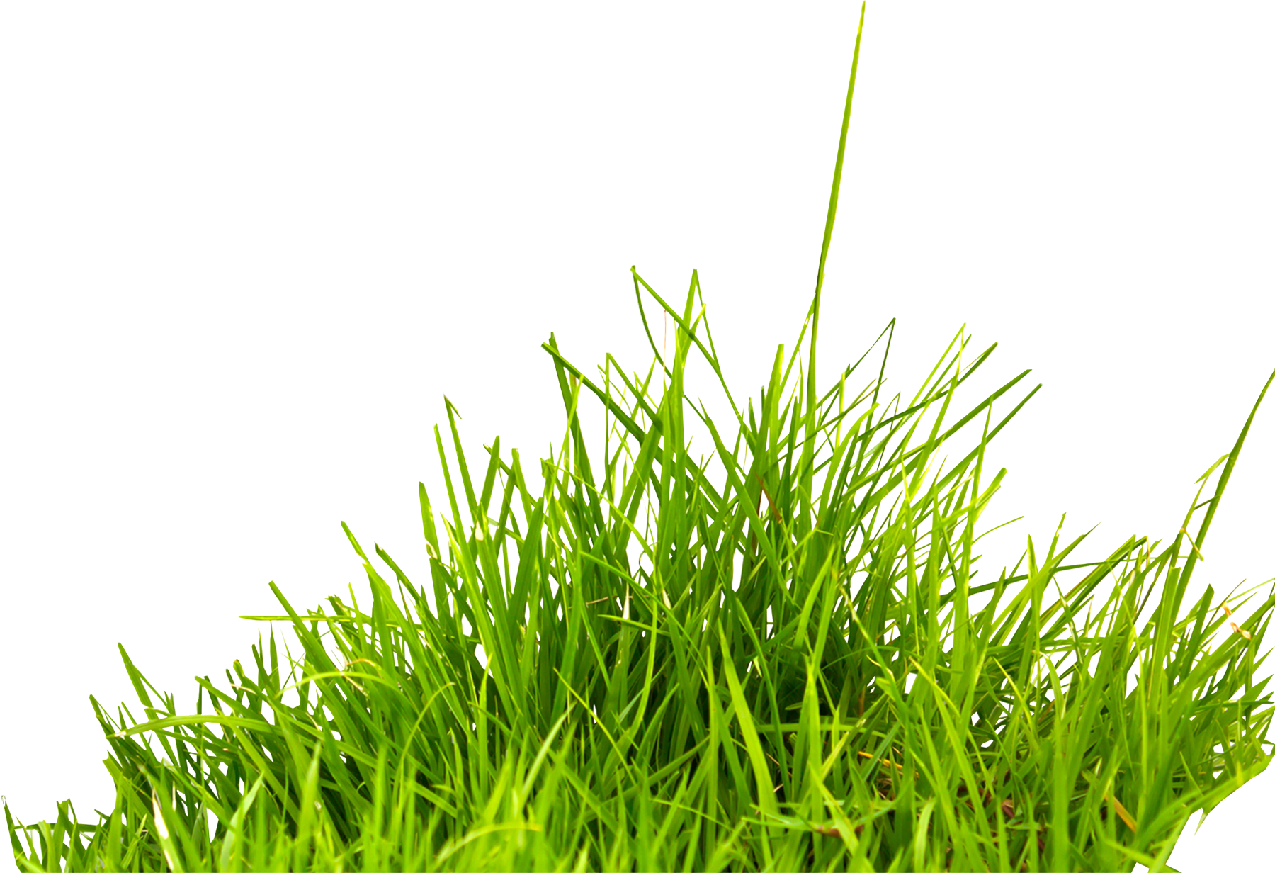Grasses PNG HD - 150635