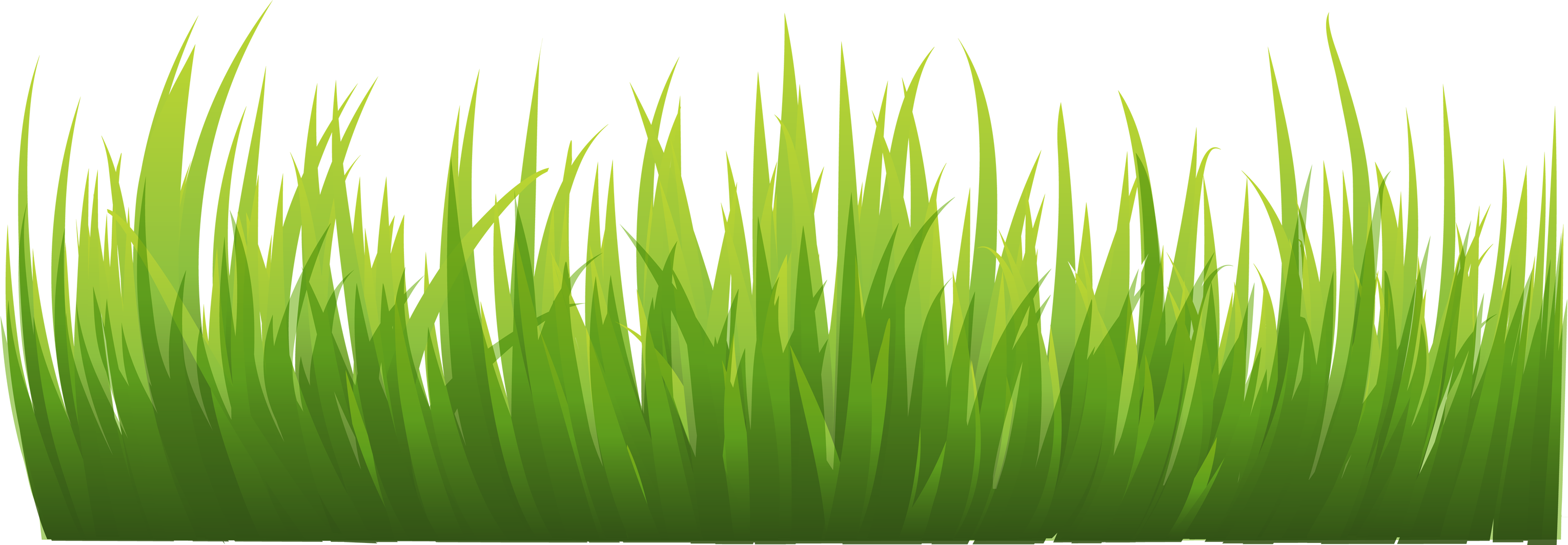 Grasses PNG HD - 150644