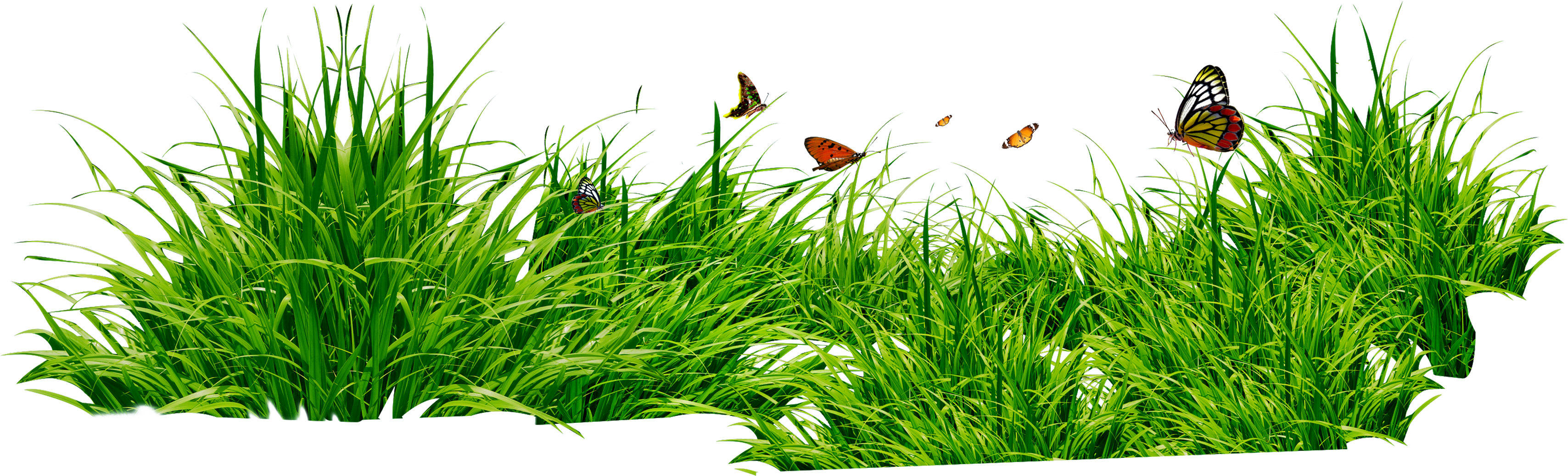 Grasses PNG HD - 150632