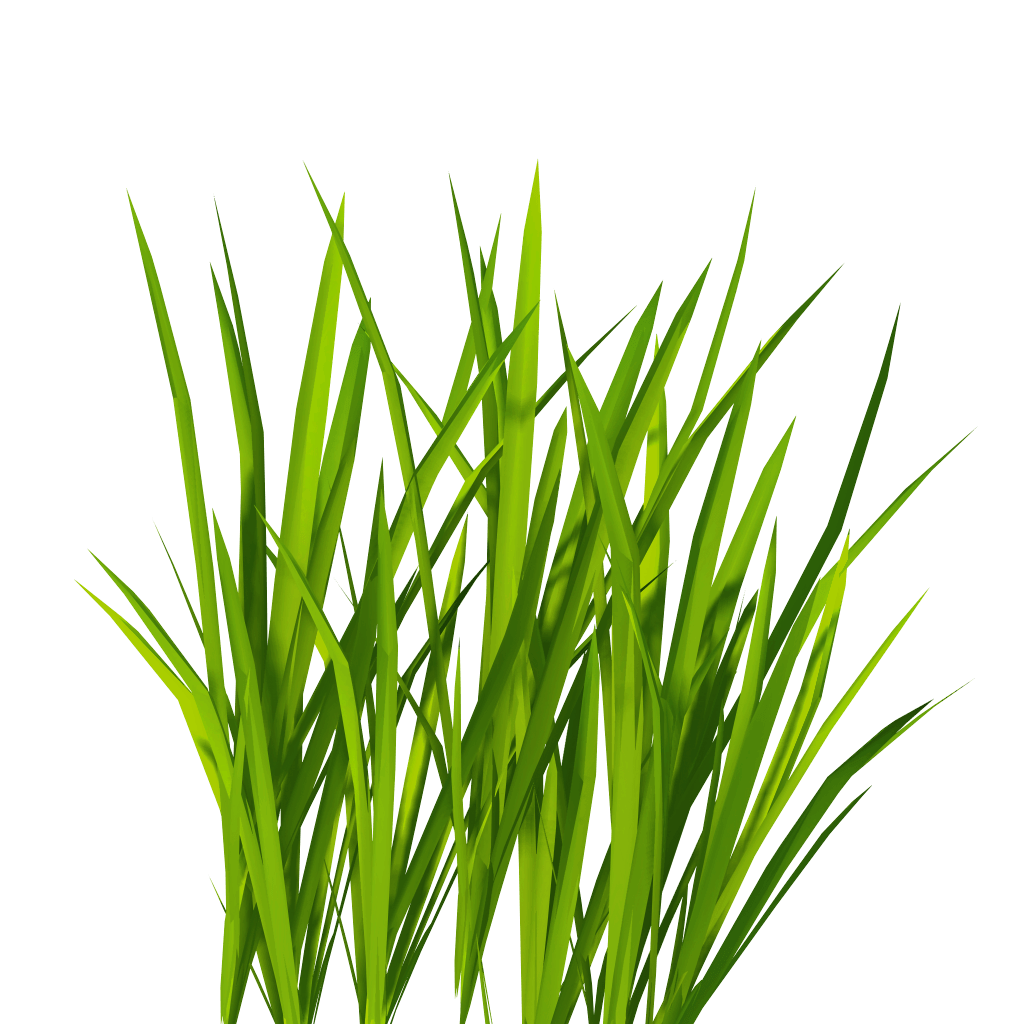 Grasses PNG HD - 150631