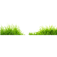 Grasses PNG HD - 150646