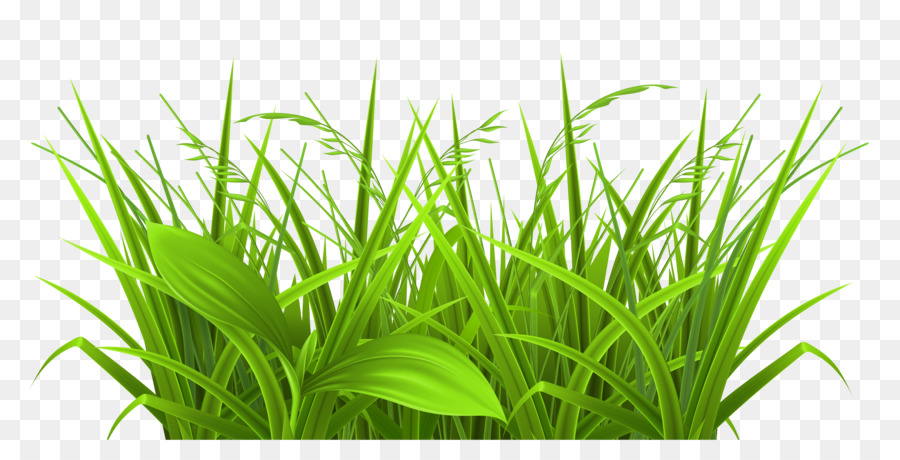 Grasses PNG HD - 150645