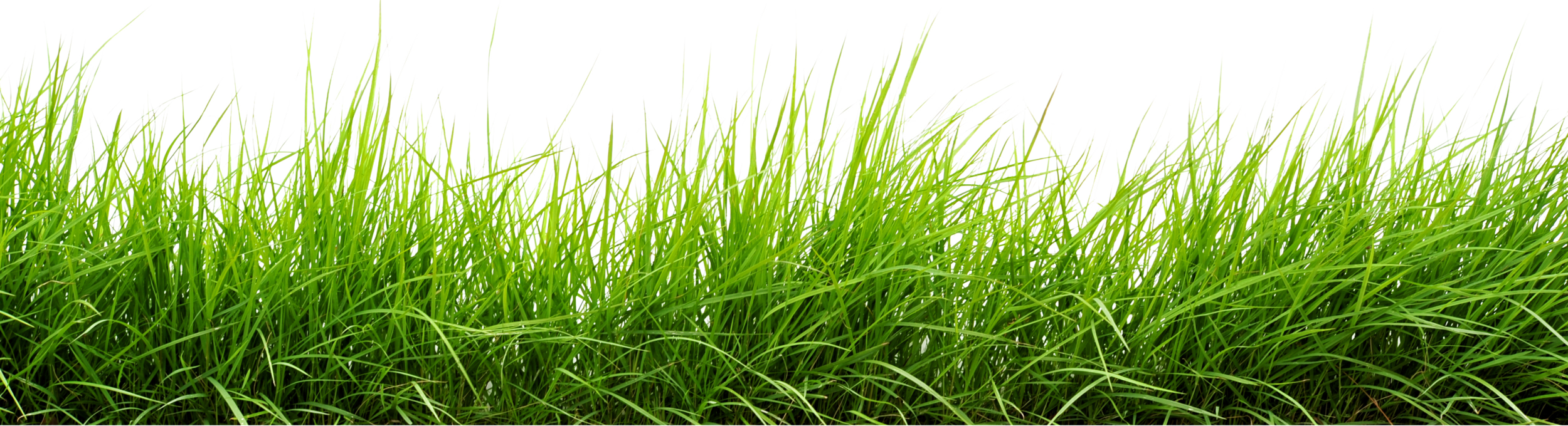 Green-Grass-17.png (2500×680) - Grasses PNG HD