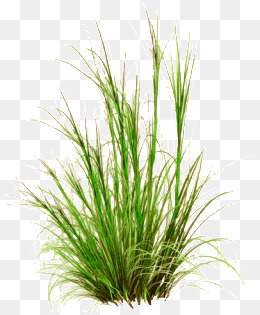 Grasses PNG HD - 150639