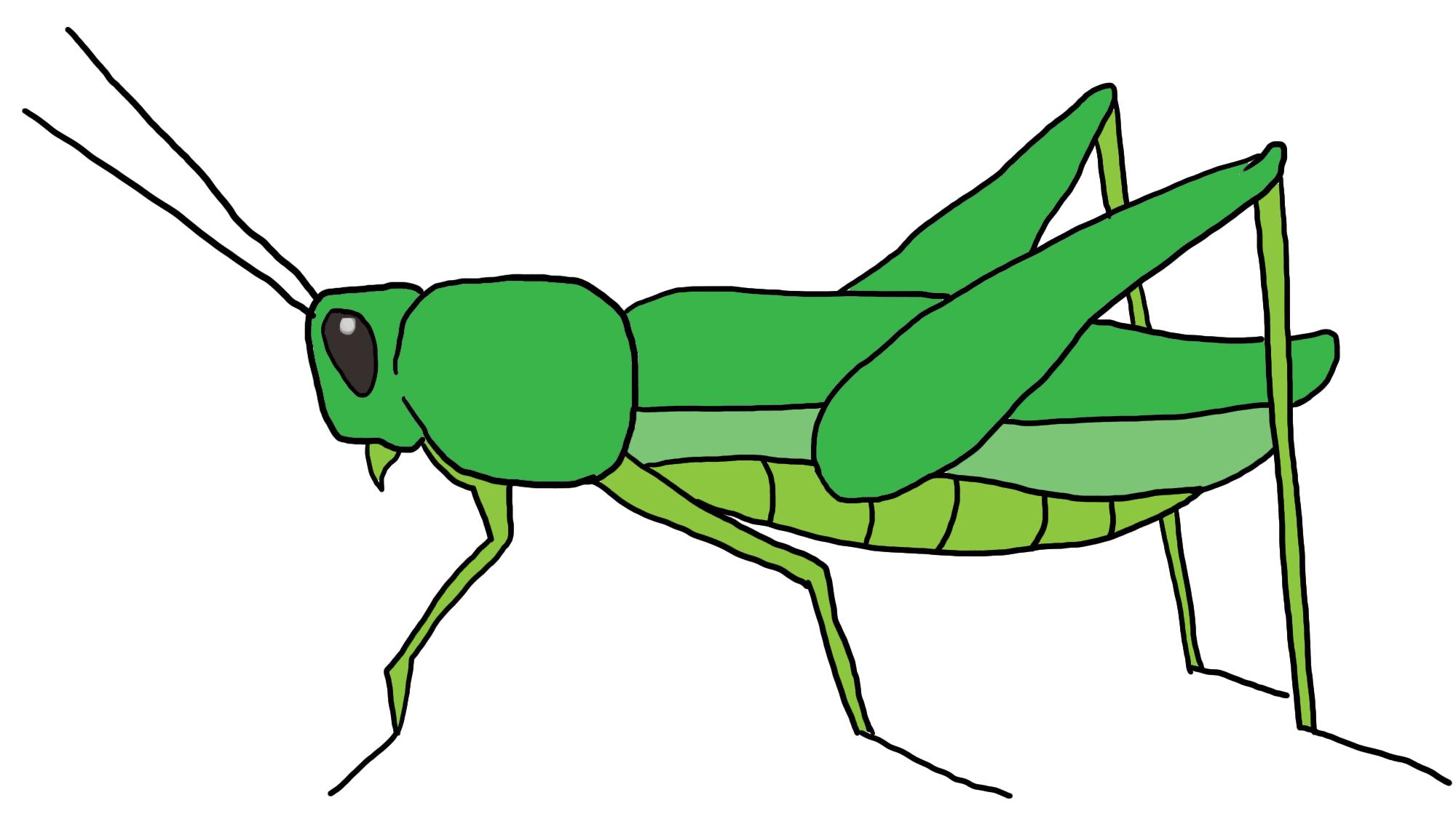 Grasshopper PNG - 28107