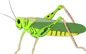 Grasshopper PNG - 28102