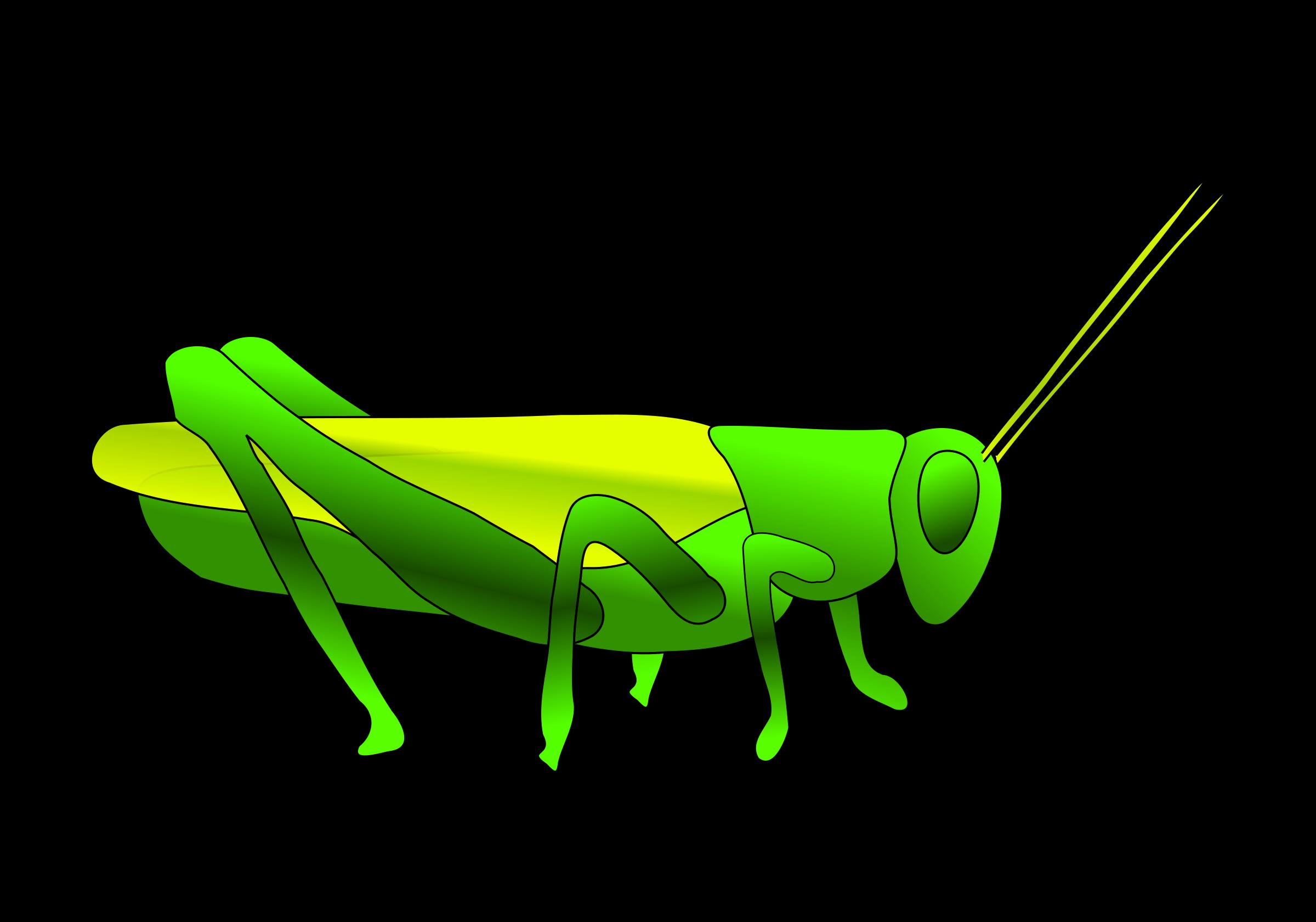 Grasshopper PNG - 28106