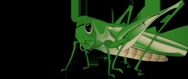 Grasshopper Transparent Background - Grasshopper PNG