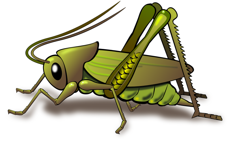 PNG - Grasshopper PNG