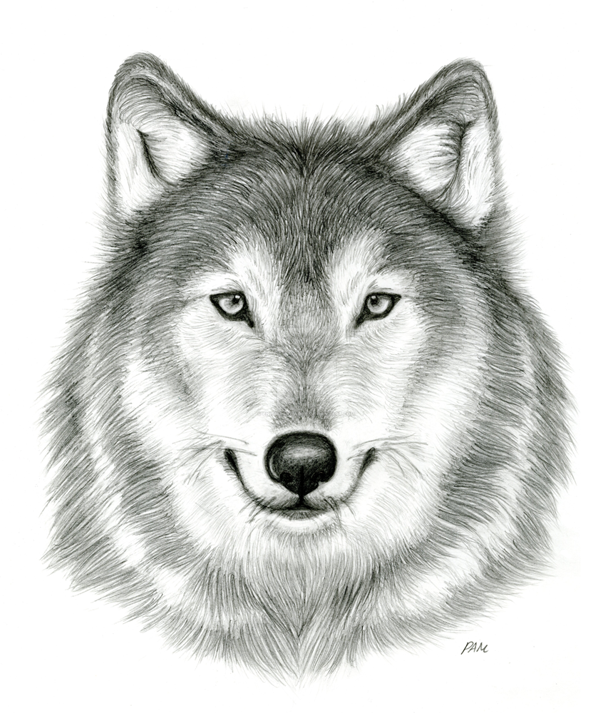 Pictures of wolves faces to draw