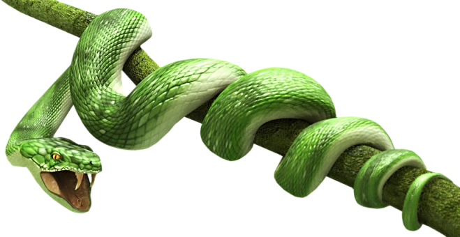 Snake PNG - 1067