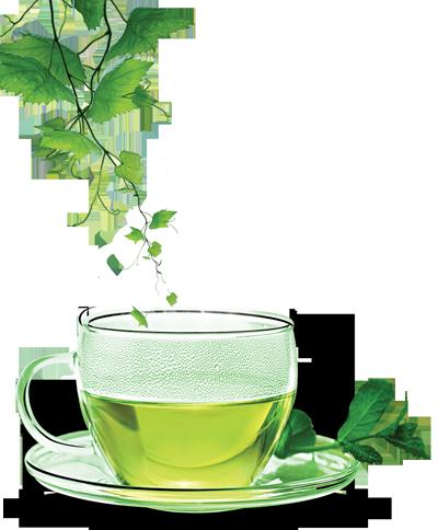 Green Tea PNG - 7422