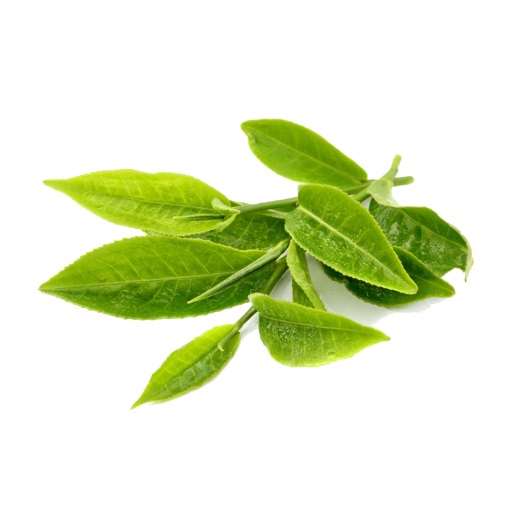 Green Tea Transparent PNG - Green Tea PNG