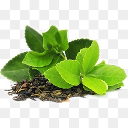 HD green tea leaves. PNG - Green Tea PNG