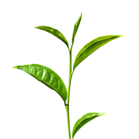 Similar Green Tea PNG Image - Green Tea PNG