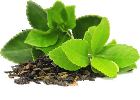 Green Tea PNG - 7413