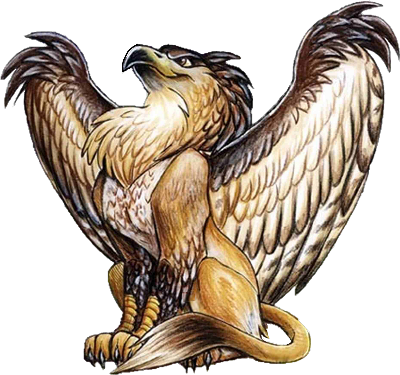 griffin definition - Google Search - Griffin PNG