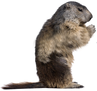 Groundhog Rules! {and the rules} - Groundhog Images PNG HD